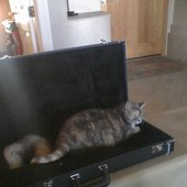 an actual housecat