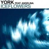 York Feat. Angelina