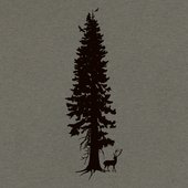 Cedar Spirits