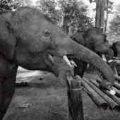 Thai Elephant Orchestra