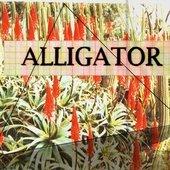ALLIGATOR - K7 artwork