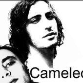Cameleon.dz