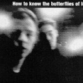 The Butterflies of Love