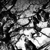 WolfRamHeart_tree