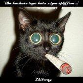 Bo kochasz tego kota z tym spliffem