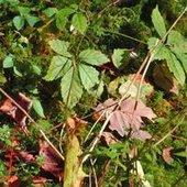Beatitudes-Autumn