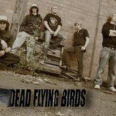 dead flying birds