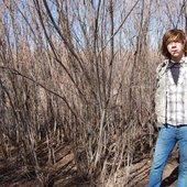 bushes n brambles