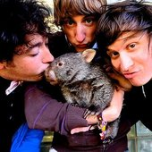 The Wombats with wombat