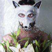 Wolf_colony.jpg