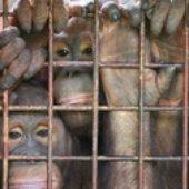 Långben Går På Zoo