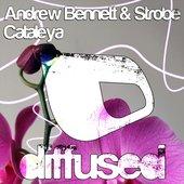 Andrew Bennett & Strobe