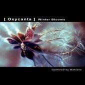 Oxycanta. Winter Blooms