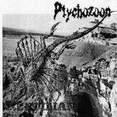 ptychozoon