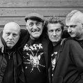Punk English Dogs 2014