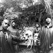 Cypress Skull
