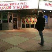 Buckskin Stallion
