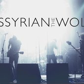 Assyrian The Wolf