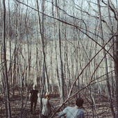 woodswalks