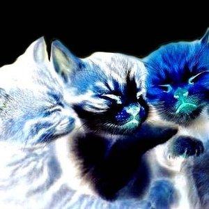 Image for 'Weird Sleeping Kittens'