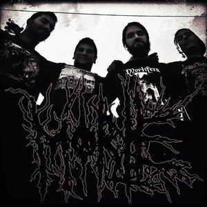 Image for 'Morte'