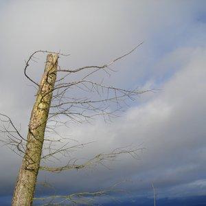Image for 'Landcrash'