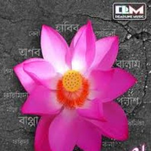 Image for 'nari'