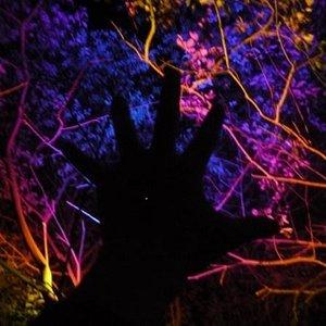 Bild für 'Baumfreund'