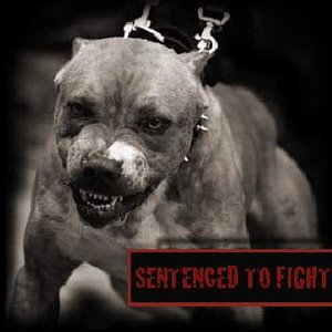 Image for 'Sentenced To Fight'