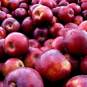 Image for 'Army of Apples'