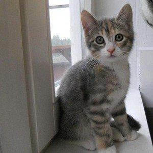 Image for 'kattenmatte'