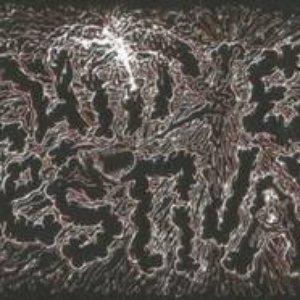 Image for 'Urine Festival'