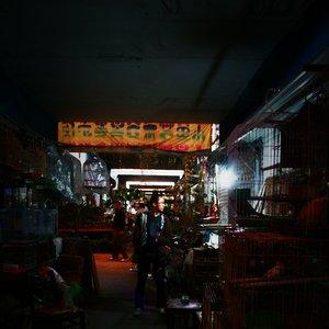 Image for 'Yin Yi'