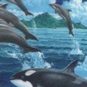 Image for 'Dolphins & Whales'