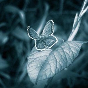 Bild für 'Ефект Метелика'