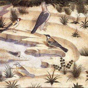 Imagem de 'Various Birds'