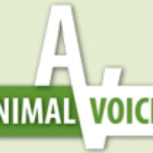 Image for 'Animal Voices'