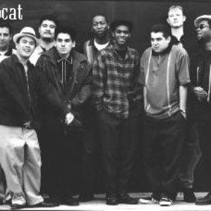 Bild für 'Hepcat'