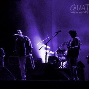 Immagine per 'Guatusi'