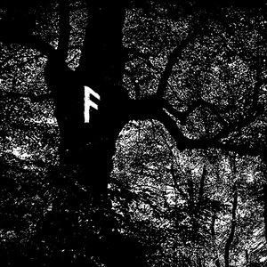 Image for 'Ancient Oak'