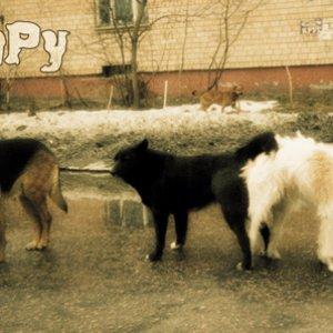 Bild für 'Skippy'