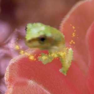 Image for 'Lost Frog Fading In Haha'