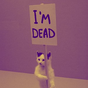 Image for 'Dead Cat'