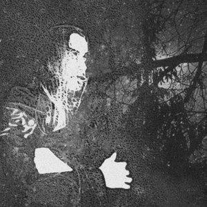 Bild för 'Forest'