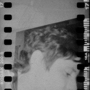 Bild för 'Foglia'