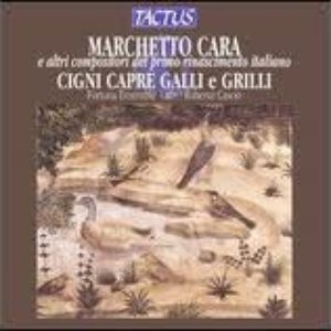 Image for 'Marchetto Cara'