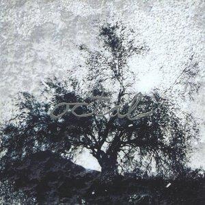 Image for 'octal'