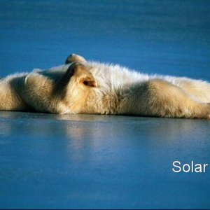 Image for 'solar polar'