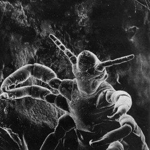 Image for 'Три Микроба'