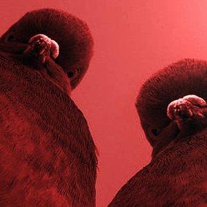 Imagem de 'Dangerous Pigeons'